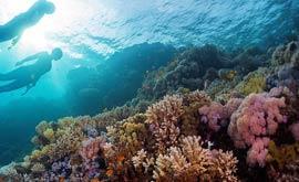Potápění v moři