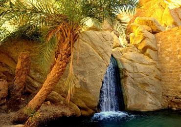 oasis-cheb.jpg
